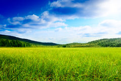 Grass and north mountain Royalty Free Stock Images