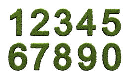 Grass numbers. 3D rendered image of grass numbers on white background Royalty Free Stock Image
