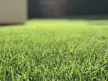 Grass and objects in background. Scene focused on grass in the foreground, sunny day. Suitable for expressing the sunny day, lights etc Royalty Free Stock Images