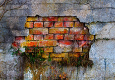 The grass on a old damaged plaster and brick wall. The grass on the old damaged plaster and brick wall Royalty Free Stock Photo