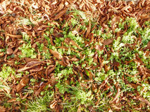Grass and old dry leaves background Royalty Free Stock Image