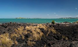 Grass On Rangitoto Island Royalty Free Stock Images