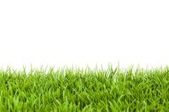 Grass On White Stock Image