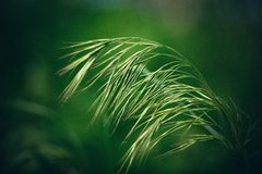Grass one Stock Image