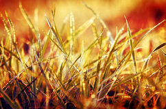 Grass with orange background Stock Images