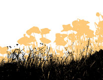Grass with orange poppy flowers.Vector Stock Photos