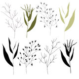 Grass outlines. Royalty Free Stock Image
