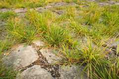 With grass overgrown basalt blocks Stock Photography