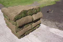 Grass on a pallet. Pile of grass twisted into a roll on a pallet in the background improves the lawn Royalty Free Stock Image