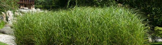 Grass. Panorama. Stock Image