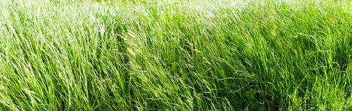 Grass Panorama Royalty Free Stock Photo