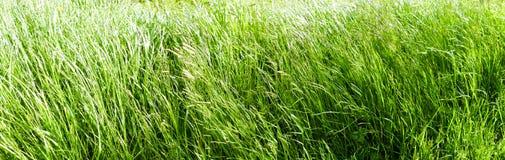 Grass Panorama Royalty Free Stock Photo