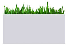 Grass in a paper box Royalty Free Stock Images