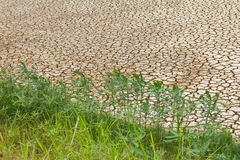Grass parched soil Royalty Free Stock Photography