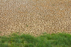 Grass parched soil Royalty Free Stock Images