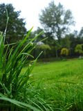 Grass in park  Royalty Free Stock Photos