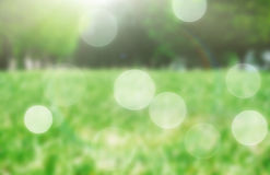 Grass in the park blurred Stock Image