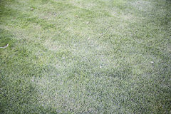 Grass in park Stock Photos