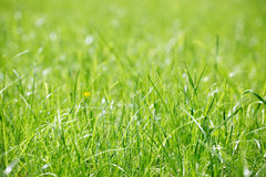 Grass at the park Royalty Free Stock Image
