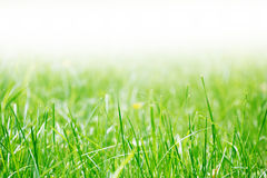 Grass at the park Royalty Free Stock Images