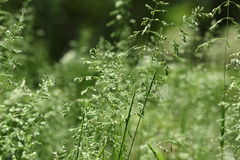 Grass. In park of Taganrog Stock Photography