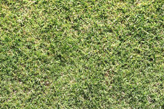 Grass in a park Royalty Free Stock Image