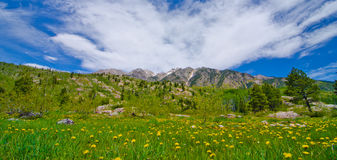 Grass Pasture in the San Juan Mountains in Colorado Royalty Free Stock Photos