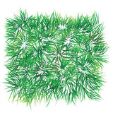 Grass patch. That can rearrange as background. Vector format is available Royalty Free Stock Photo