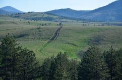 Free Grass Path Royalty Free Stock Photos - 57741258