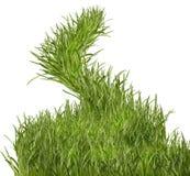 Grass path Stock Image