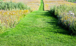Grass path Stock Photo