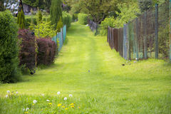 Grass path Stock Images