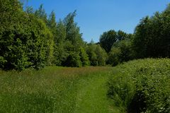 Grass path through lush green summer landscape Stock Photography