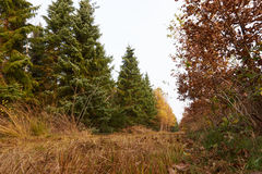 Grass path between the trees in the fores at fall. Path leading through the trees in the forest in autumn Stock Images