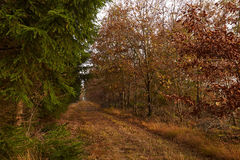 Grass path between the trees in the forest at fall. Path of grass between the trees in the forest in autumn Royalty Free Stock Image
