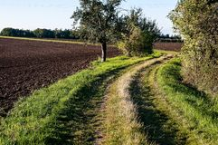 Grass path and trees Stock Images