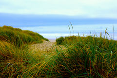 Grass Pathway to Beach. Wind-blown grasses along pathway to beach with ocean water on horizon Royalty Free Stock Images