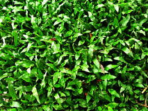 Grass pattern bacground texture Stock Images