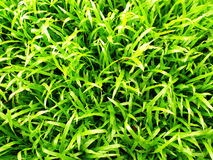 Grass pattern Royalty Free Stock Images