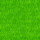 Grass pattern Stock Photography