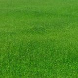 Grass pattern natural Royalty Free Stock Photo
