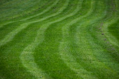 Grass pattern. Grass with a neat pattern Stock Image