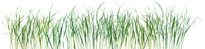 Grass pattern texture isolated Stock Photography