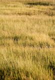 Grass Patterns. Grasses bathed in early evening light create patterns and textures stock photography