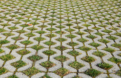 Grass pavement Royalty Free Stock Photos