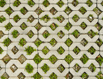 Grass paving. Paveing that mix between concrete block and grass Stock Photo