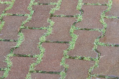 Grass in the paving slab Stock Images