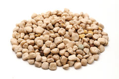 Grass peas Stock Images