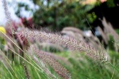 Grass pennants flutter royalty free stock photos