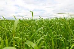 Grass and perfect blue sky Stock Photos